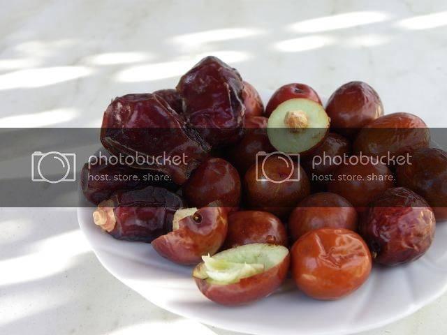 Полезные свойства зизифуса и противопоказания к его применению — рецепты и особенности использования в питании (100 фото и видео)