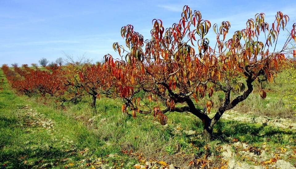 Февраль в саду — зимняя профилактическая обрезка плодовых деревьев, проверка черенков, видео