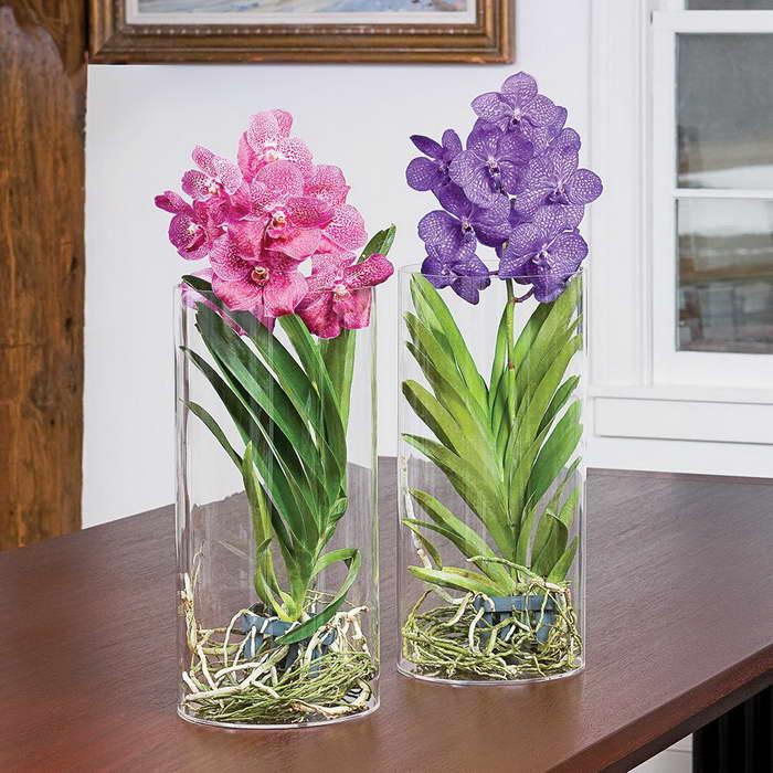 Прекрасная орхидея ванда: уход в домашних условиях