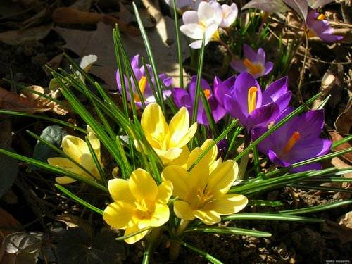 Весенние первоцветы (фото с названиями): разбудите ваш дачный участок!