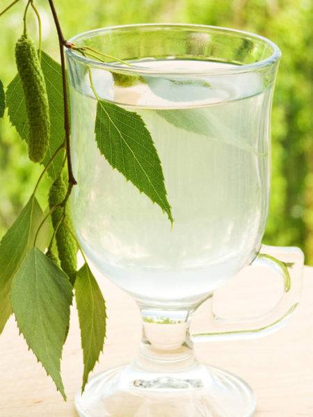Березовый сок: польза и противопоказания при приеме напитка для организма