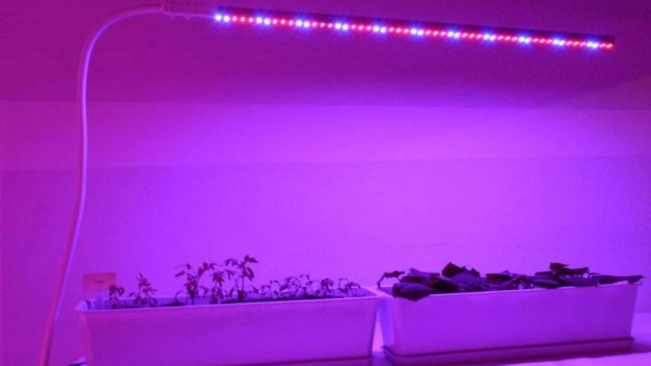 Подсветка рассады светодиодными лампами своими руками