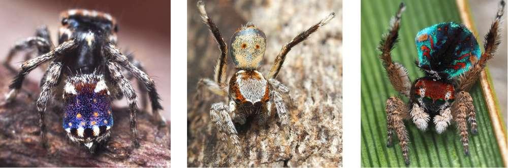 Черно желтая гусеница название. как волосатые гусеницы могут предсказывать погоду