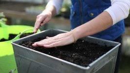 Опилки в помощь садоводу