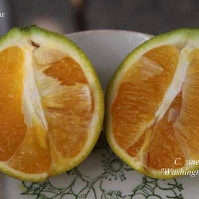 Особенности лимона-апельсина