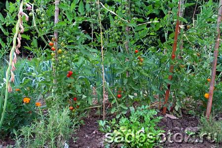 Дачные и садовые работы в августе. полезные советы и рекомендации опытного садовода