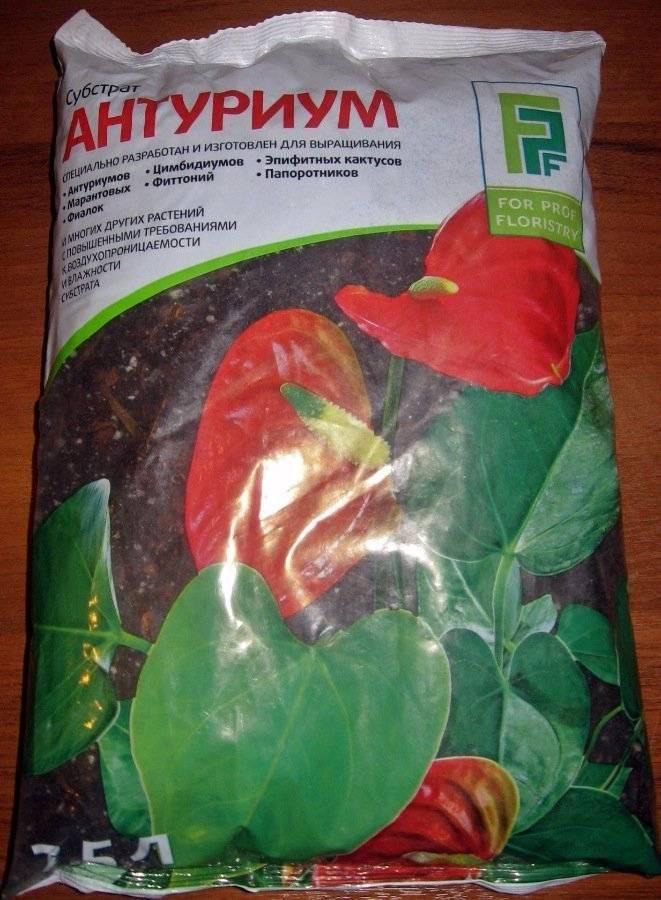 Антуриум — чудо с хвостиком!