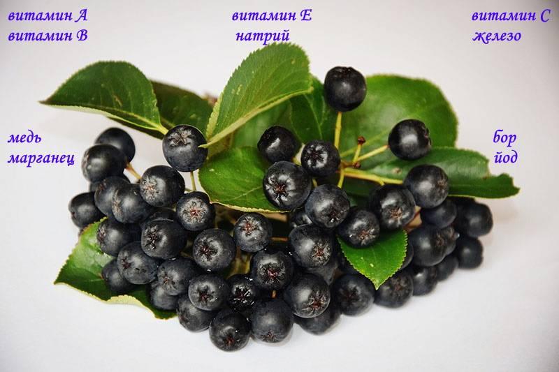 Сорбарония (гибрид аронии и рябины) - выращивание. посадка, размножение, уход, морозостойкость. агротехнические технологии