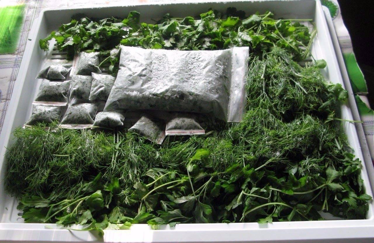 Как хранить зелень в холодильнике долго, как лучше мыть