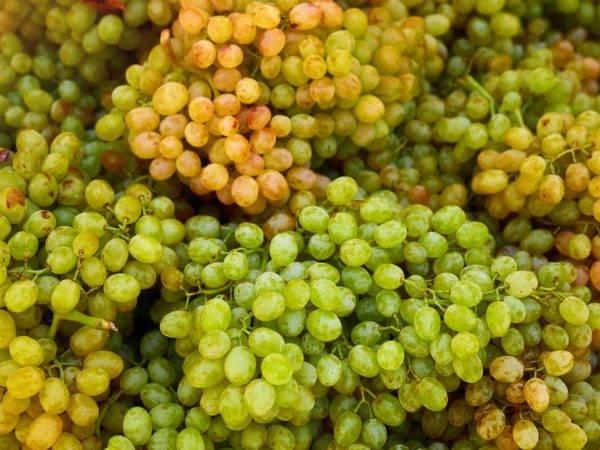 Лучшие сорта винограда для рынка