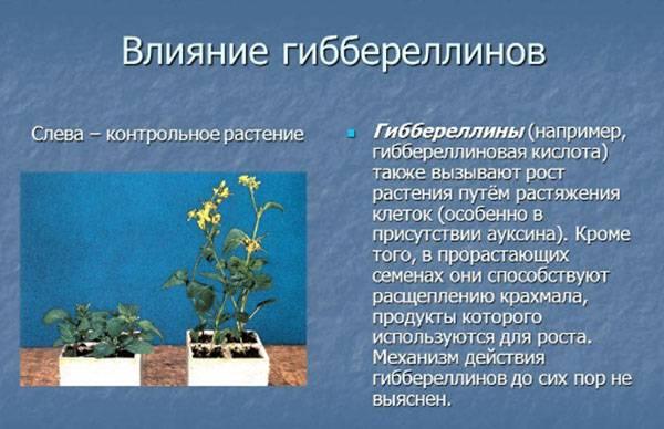Стимуляторы (регуляторы) роста растений