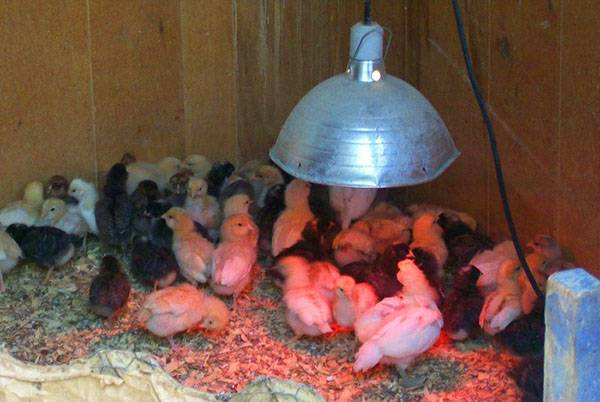 Инфракрасная лампа для обогрева животных, птицы и рассады