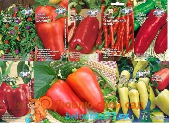 Как выращивать перец чили дома в горшке?