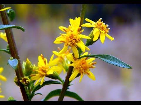Низкорослые кустарники — цветущие и декоративно-лиственные для сада