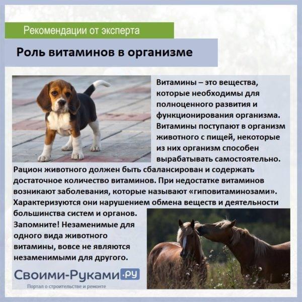 Инструкция по применению тетрамизола 10: особенности использования для каждого животного