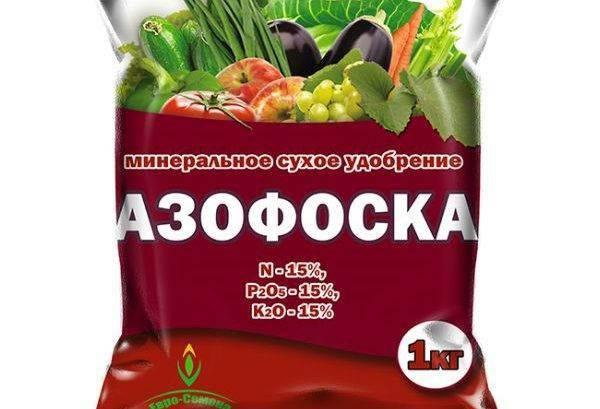 Подкормка клубники: удобрения для обильного урожая