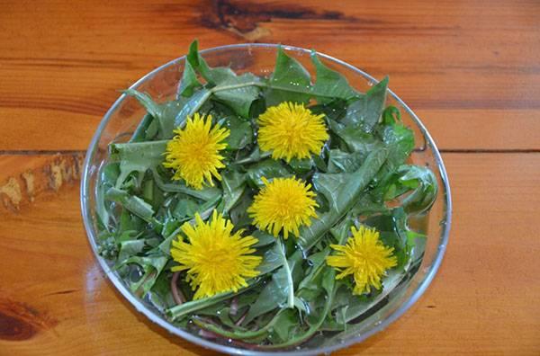 Салат из одуванчиков: польза, как приготовить