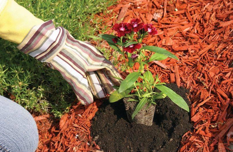 Уход и выращивание кустарников
