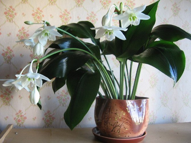 Выращивание лилий в контейнерах и горшках – все, что вы хотели знать