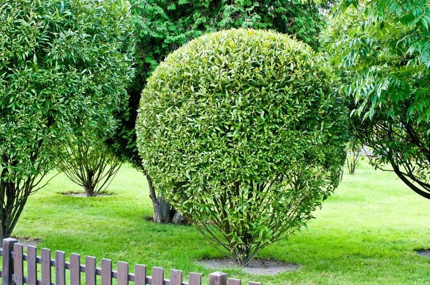 Ива свердловская извилистая — 5 особенностей и 8 советов по посадке и уходу