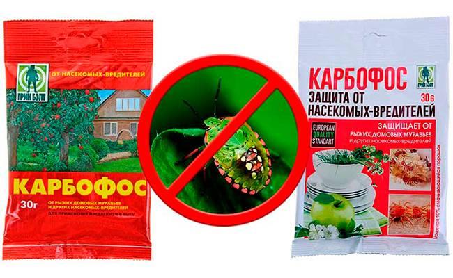 9 правил, которые надо соблюдать при обработке растений пестицидами