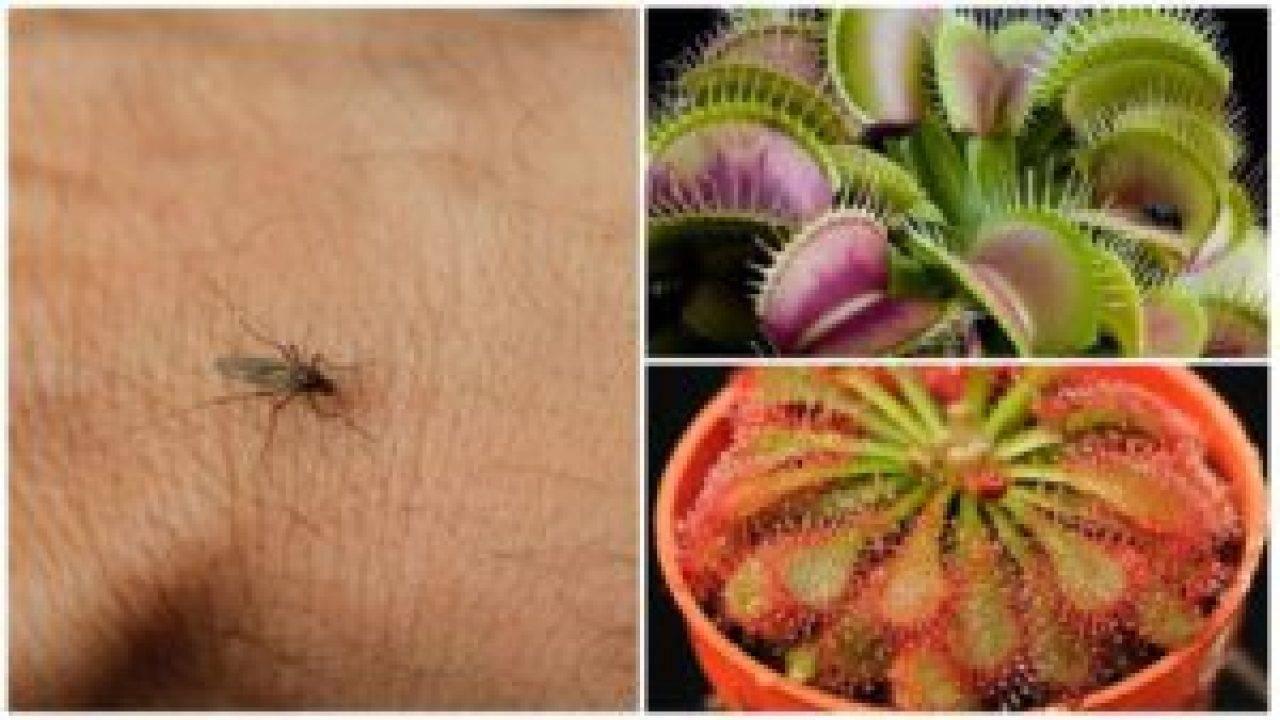 14 полезных растений и пряных трав – в ваш аптекарский огород