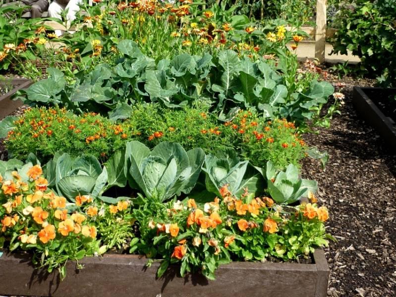 Планирование посадок овощей: севооборот