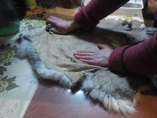 Выделка шкур кролика в домашних условиях