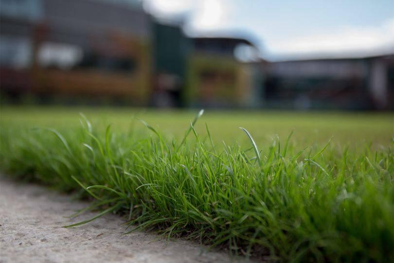 Виды газонов и их особенности
