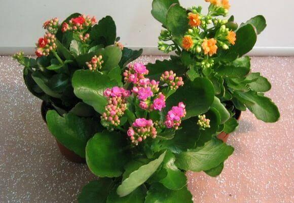 Выбираем гипоаллергенные цветы для истинного наслаждения