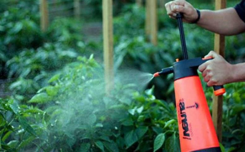 8 способов применения борной кислоты в саду и огороде