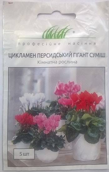 Цикламен: выращивание из семян в домашних условиях