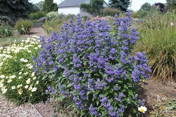Какие выбрать растения для рокария