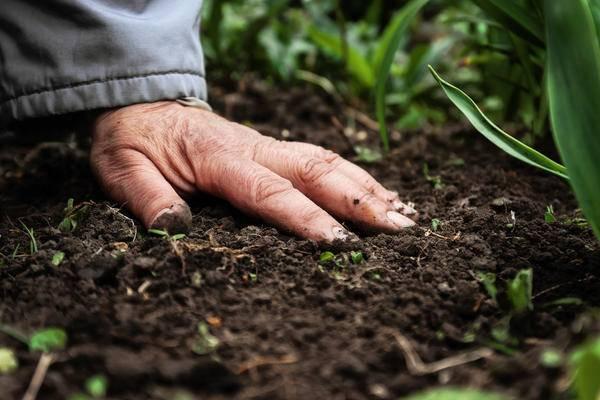 20 простых способов как и чем удобрить огород