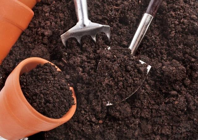 Правильный состав грунта для рассады