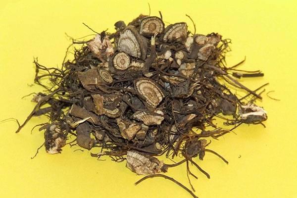 Эхинацея: состав, заготовка, лечебные свойства, применение и противопоказания