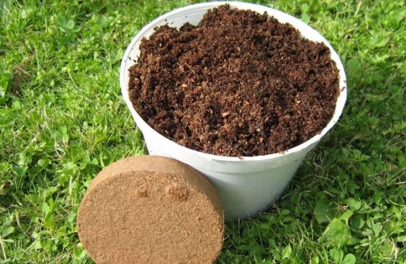 Кокосовый субстрат для семян и рассады – как подготовить и использовать