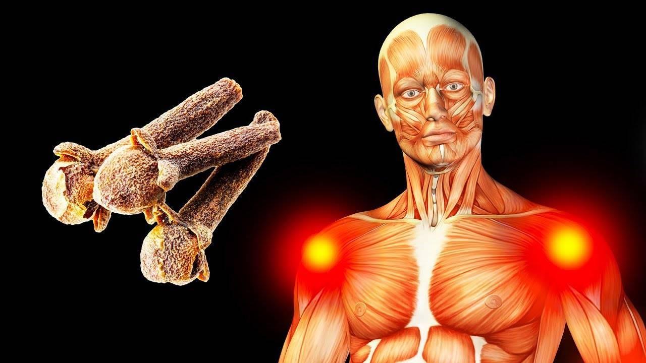 Гвоздика: польза и вред для здоровья