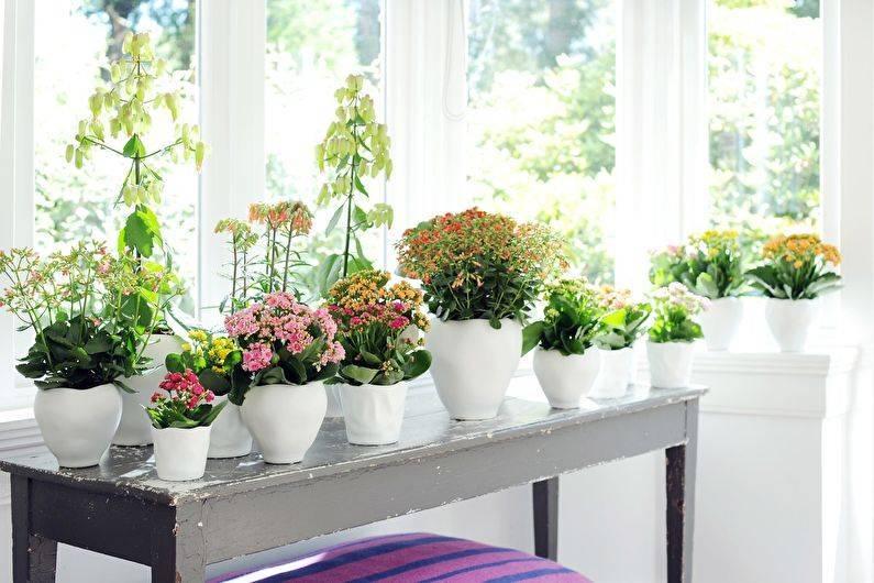 Как правильно ухаживать за каланхоэ в домашних условиях