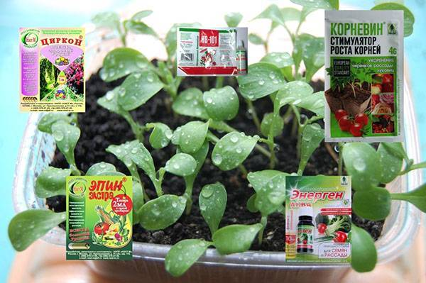 Стимуляторы роста растений – что это и для чего нужны?