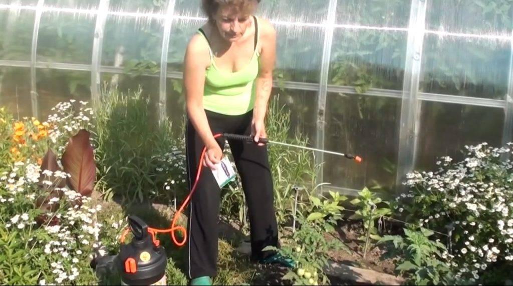 Чем оксихом поможет помидорам, как применять