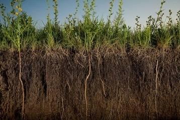 Сидераты на даче: когда, какие и как правильно сеять