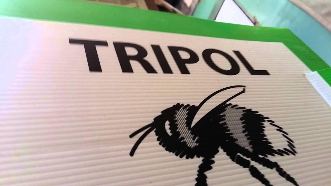 Для чего нужны трутни в пчелиной семье