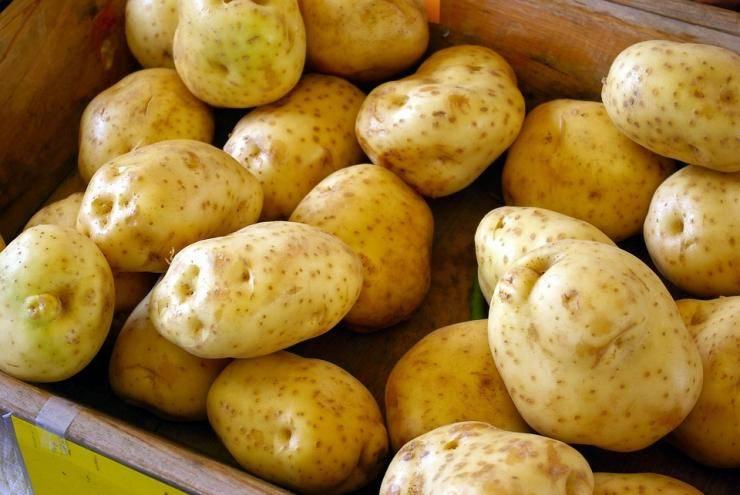 ранние сорта картошки украина с фото после