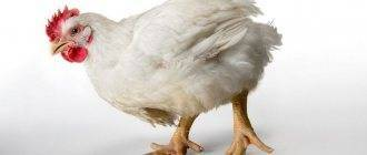 Кормовая добавка гамматоник для животных