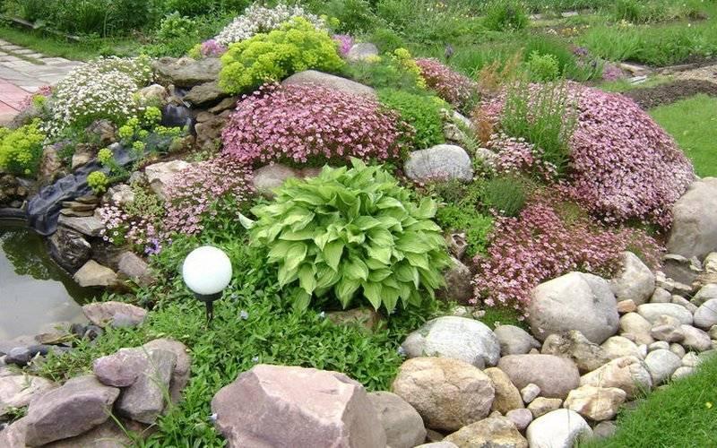 Цветы для альпийской горки: названия и фото