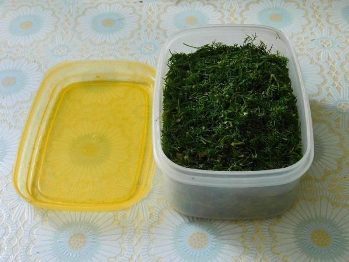 Проверенные и оригинальные рецепты заготовки укропа на зиму