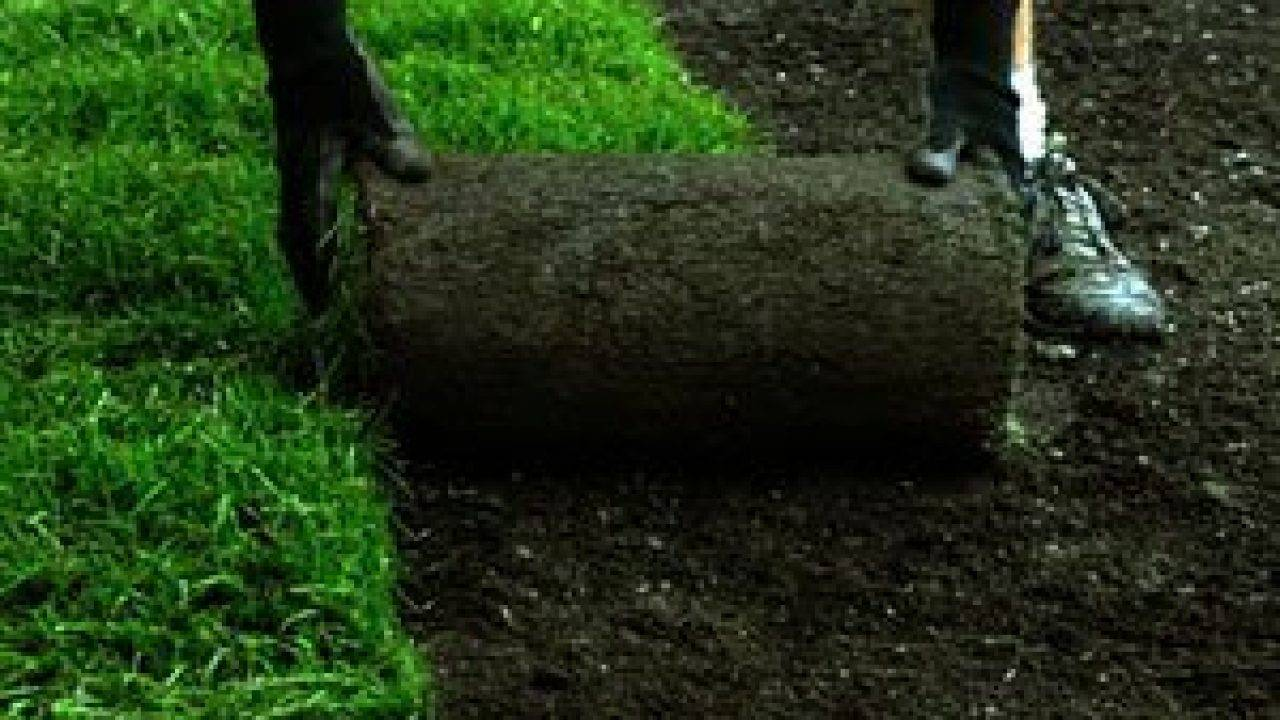 «зелёный ковёр»: как весной самостоятельно высадить газон