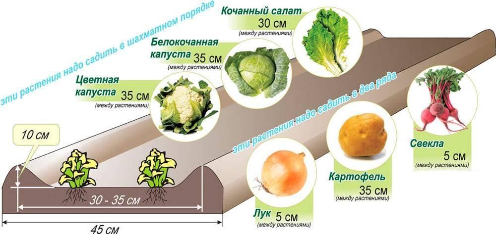 Узкие грядки по митлайдеру – минимум хлопот, максимум урожая