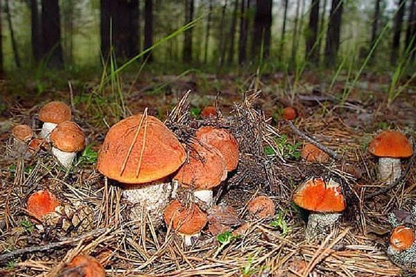 Правила сбора грибов